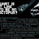 octopus facts vision brain arms intelligence clever cephalopod
